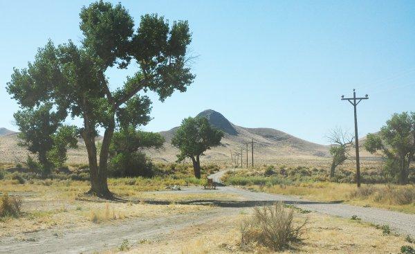 Carson River Ranches